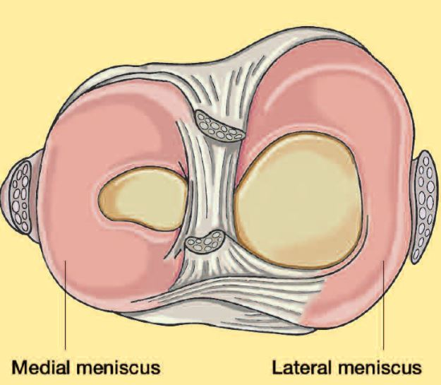 what-is-the-meniscus