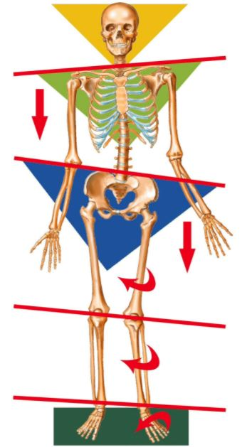 Leg length discrepancy anatomical causes