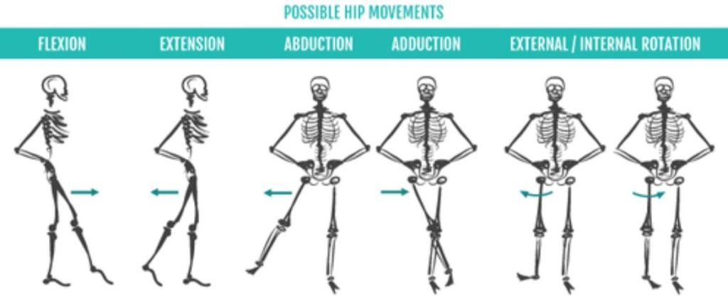 Possible Hip movements are flexion, extension, abduction, adduction, and internal/external rotation.